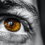 person s brown eye